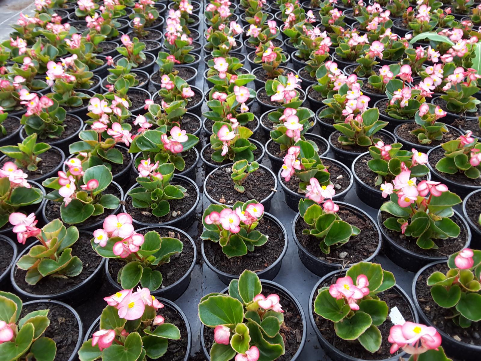 Beet Und Balkonpflanzen Blumen Frumm
